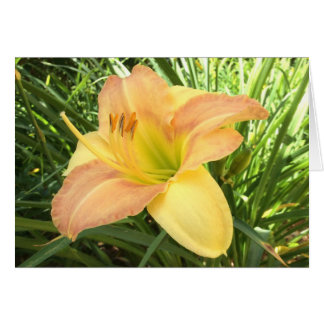 "DAYLILY ""Blond Baby"" --- Yellow green orange. Card"