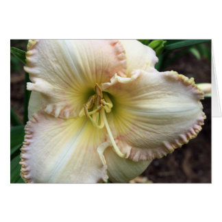 Daylily Dreaming Card