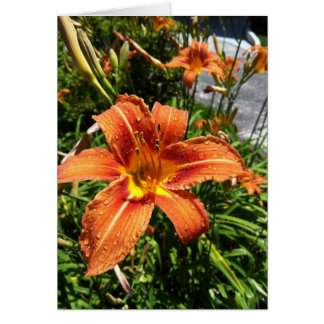 Daylily Notecards Card