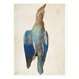 Dead Blue Roller by Albrecht Durer Postcard