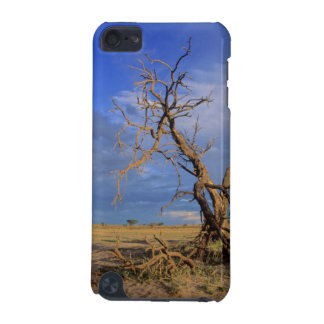 Dead Camel Thorn (Acacia Erioloba) Tree iPod Touch 5G Cases