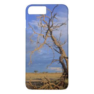 Dead Camel Thorn (Acacia Erioloba) Tree iPhone 7 Plus Case