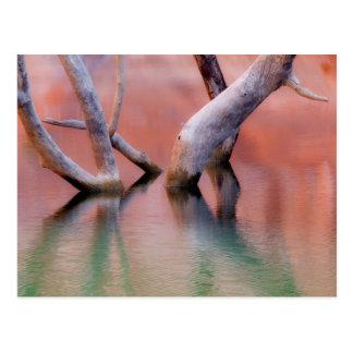 Dead Cottonwood Trunks in Lake | Utah Postcard
