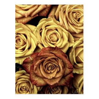 Dead Flowers Postcard