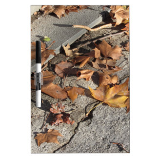 Dead leaves lying on the ground in the fall dry erase board