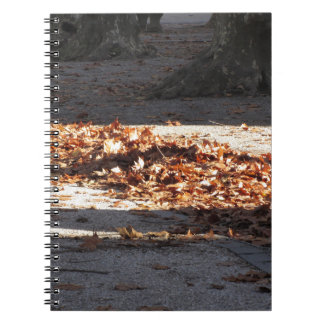 Dead leaves lying on the ground in the fall note books
