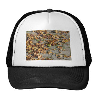 Dead leaves lying on the ground in the fall trucker hat
