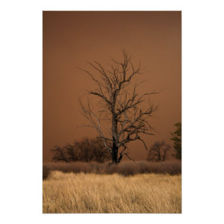 Dead tree and a sandstorm. poster