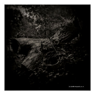 Dead Tree - Art Poster - Toy Camera - Diana