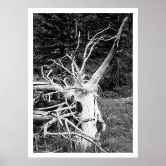 Dead Tree Black & White Print