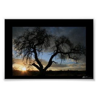 Dead Tree Sunset Poster