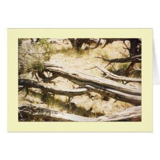 Deadwood Card