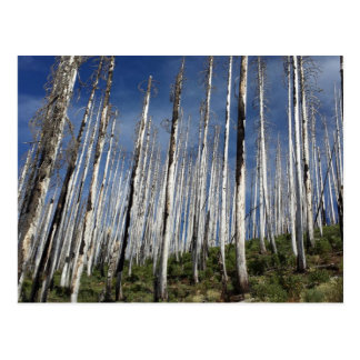 Deadwood Forest postcards