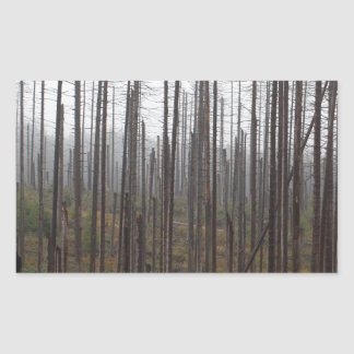 Death spruce trees