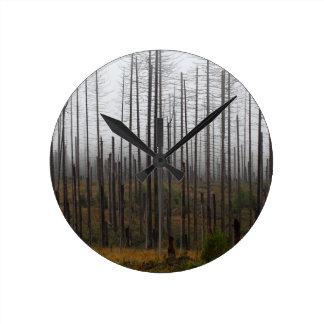 Death spruce trees round clock