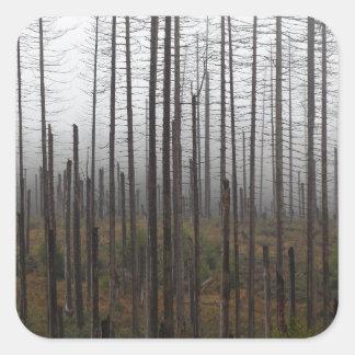 Death spruce trees square sticker