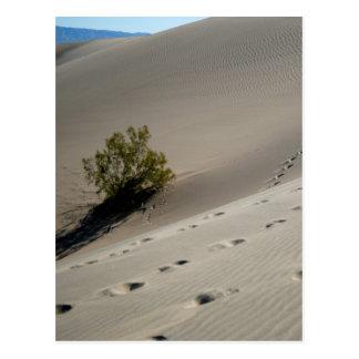 Death Valley Dunes 4 Postcard