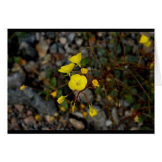 Death Valley Flowers Note Card