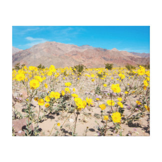 Death Valley Wildflowers Canvas Print