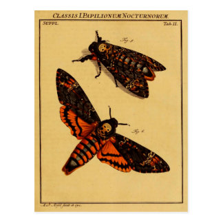 Death's Head Moth Postcard