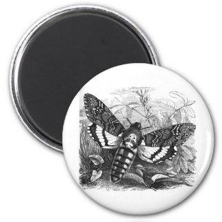 Deathshead Hawk Moth Magnet