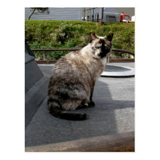 Debbie the boat cat postcard