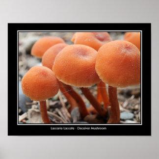 Deceiver Mushroom Photo Poster