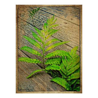 Deck Ferns Posters