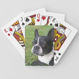 deck of playing cards, with boston terrier playing cards