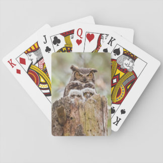 Deck of playing cards with owls