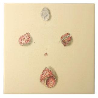 Decorative Beach Theme Accent Tiles, Sea Shells Tile