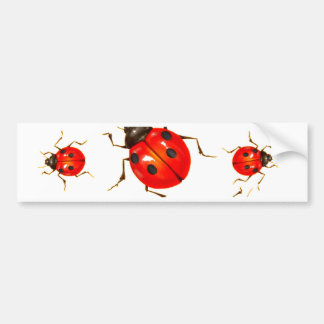 DECORATIVE RED LADY BUG GIFTS BUMPER STICKER