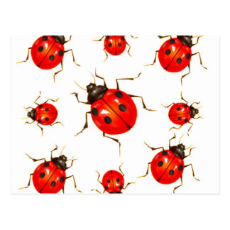 DECORATIVE RED LADY BUG GIFTS POSTCARD