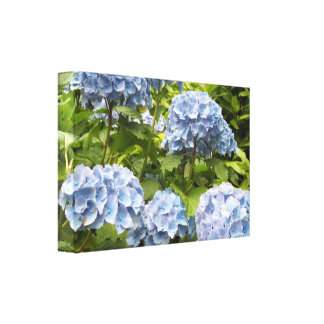 Deep Blue Hydrangeas Canvas Print