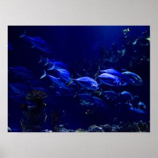 Deep Blue Undersea Tropical Fish Poster