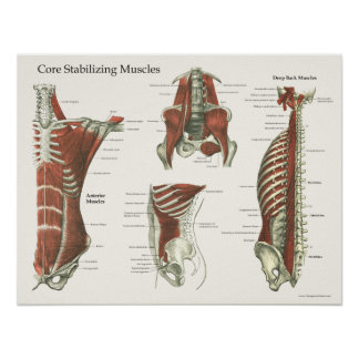 Deep & Core Stabilizing Muscles Anatomy Poster #1