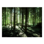 Deep Forest Posters
