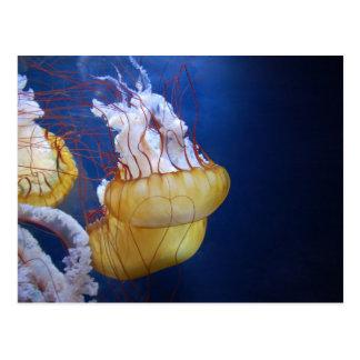 Deep Ocean Jelly Fish Postcard