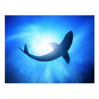 Deep Ocean Shark Silhouette Postcard