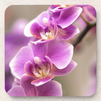 Deep Pink Phalaenopsis Orchid Flower Chain Beverage Coasters