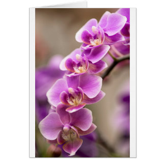 Deep Pink Phalaenopsis Orchid Flower Chain Card