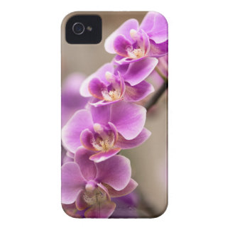 Deep Pink Phalaenopsis Orchid Flower Chain Case-Mate iPhone 4 Cases