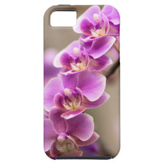 Deep Pink Phalaenopsis Orchid Flower Chain iPhone 5 Cover