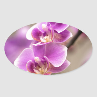 Deep Pink Phalaenopsis Orchid Flower Chain Oval Sticker