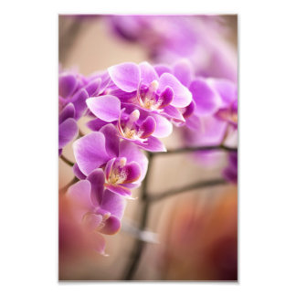 Deep Pink Phalaenopsis Orchid Flower Chain Photo Print