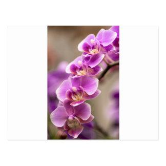 Deep Pink Phalaenopsis Orchid Flower Chain Postcard