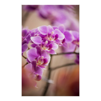 Deep Pink Phalaenopsis Orchid Flower Chain Poster
