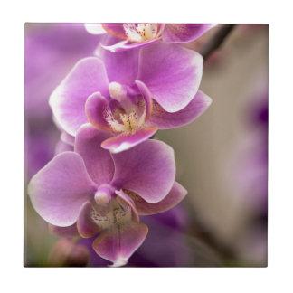 Deep Pink Phalaenopsis Orchid Flower Chain Tile