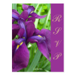 "Deep Purple Irises ""RSVP"" Post Cards"