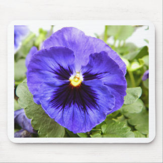 Deep Purple Pansy Mouse Pad